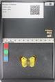 http://mczbase.mcz.harvard.edu/specimen_images/ent-lepidoptera/images/2011_03_23/IMG_078400.JPG