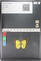 http://mczbase.mcz.harvard.edu/specimen_images/ent-lepidoptera/images/2011_03_23/IMG_078401.JPG