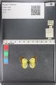 http://mczbase.mcz.harvard.edu/specimen_images/ent-lepidoptera/images/2011_03_23/IMG_078404.JPG