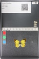 http://mczbase.mcz.harvard.edu/specimen_images/ent-lepidoptera/images/2011_03_23/IMG_078405.JPG