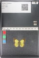 http://mczbase.mcz.harvard.edu/specimen_images/ent-lepidoptera/images/2011_03_23/IMG_078410.JPG