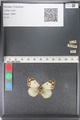 http://mczbase.mcz.harvard.edu/specimen_images/ent-lepidoptera/images/2011_03_23/IMG_078412.JPG