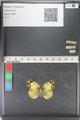 http://mczbase.mcz.harvard.edu/specimen_images/ent-lepidoptera/images/2011_03_23/IMG_078413.JPG
