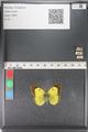 http://mczbase.mcz.harvard.edu/specimen_images/ent-lepidoptera/images/2011_03_23/IMG_078417.JPG