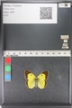 http://mczbase.mcz.harvard.edu/specimen_images/ent-lepidoptera/images/2011_03_23/IMG_078418.JPG