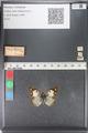 http://mczbase.mcz.harvard.edu/specimen_images/ent-lepidoptera/images/2011_03_23/IMG_078419.JPG