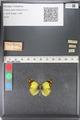 http://mczbase.mcz.harvard.edu/specimen_images/ent-lepidoptera/images/2011_03_23/IMG_078424.JPG