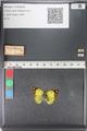 http://mczbase.mcz.harvard.edu/specimen_images/ent-lepidoptera/images/2011_03_23/IMG_078425.JPG