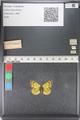 http://mczbase.mcz.harvard.edu/specimen_images/ent-lepidoptera/images/2011_03_23/IMG_078427.JPG