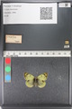 http://mczbase.mcz.harvard.edu/specimen_images/ent-lepidoptera/images/2011_03_23/IMG_078428.JPG