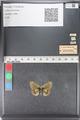 http://mczbase.mcz.harvard.edu/specimen_images/ent-lepidoptera/images/2011_03_23/IMG_078429.JPG