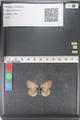 http://mczbase.mcz.harvard.edu/specimen_images/ent-lepidoptera/images/2011_03_23/IMG_078430.JPG