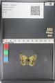 http://mczbase.mcz.harvard.edu/specimen_images/ent-lepidoptera/images/2011_03_23/IMG_078434.JPG