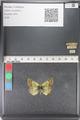 http://mczbase.mcz.harvard.edu/specimen_images/ent-lepidoptera/images/2011_03_23/IMG_078435.JPG
