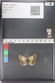 http://mczbase.mcz.harvard.edu/specimen_images/ent-lepidoptera/images/2011_03_23/IMG_078436.JPG