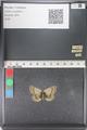 http://mczbase.mcz.harvard.edu/specimen_images/ent-lepidoptera/images/2011_03_23/IMG_078437.JPG