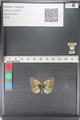 http://mczbase.mcz.harvard.edu/specimen_images/ent-lepidoptera/images/2011_03_23/IMG_078438.JPG
