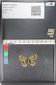 http://mczbase.mcz.harvard.edu/specimen_images/ent-lepidoptera/images/2011_03_23/IMG_078439.JPG