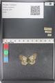 http://mczbase.mcz.harvard.edu/specimen_images/ent-lepidoptera/images/2011_03_23/IMG_078440.JPG