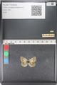 http://mczbase.mcz.harvard.edu/specimen_images/ent-lepidoptera/images/2011_03_23/IMG_078441.JPG