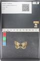http://mczbase.mcz.harvard.edu/specimen_images/ent-lepidoptera/images/2011_03_23/IMG_078442.JPG