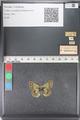 http://mczbase.mcz.harvard.edu/specimen_images/ent-lepidoptera/images/2011_03_23/IMG_078443.JPG