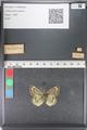 http://mczbase.mcz.harvard.edu/specimen_images/ent-lepidoptera/images/2011_03_23/IMG_078446.JPG