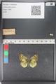 http://mczbase.mcz.harvard.edu/specimen_images/ent-lepidoptera/images/2011_03_23/IMG_078447.JPG