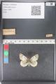 http://mczbase.mcz.harvard.edu/specimen_images/ent-lepidoptera/images/2011_03_23/IMG_078449.JPG