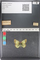 http://mczbase.mcz.harvard.edu/specimen_images/ent-lepidoptera/images/2011_03_23/IMG_078450.JPG