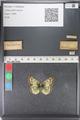 http://mczbase.mcz.harvard.edu/specimen_images/ent-lepidoptera/images/2011_03_23/IMG_078451.JPG