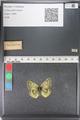 http://mczbase.mcz.harvard.edu/specimen_images/ent-lepidoptera/images/2011_03_23/IMG_078453.JPG