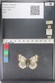 http://mczbase.mcz.harvard.edu/specimen_images/ent-lepidoptera/images/2011_03_23/IMG_078456.JPG