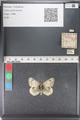 http://mczbase.mcz.harvard.edu/specimen_images/ent-lepidoptera/images/2011_03_23/IMG_078457.JPG