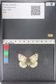 http://mczbase.mcz.harvard.edu/specimen_images/ent-lepidoptera/images/2011_03_23/IMG_078458.JPG