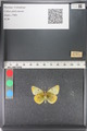 http://mczbase.mcz.harvard.edu/specimen_images/ent-lepidoptera/images/2011_03_23/IMG_078459.JPG
