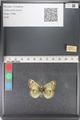 http://mczbase.mcz.harvard.edu/specimen_images/ent-lepidoptera/images/2011_03_23/IMG_078460.JPG