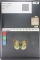 http://mczbase.mcz.harvard.edu/specimen_images/ent-lepidoptera/images/2011_03_23/IMG_078461.JPG