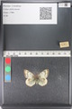 http://mczbase.mcz.harvard.edu/specimen_images/ent-lepidoptera/images/2011_03_23/IMG_078462.JPG