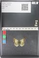 http://mczbase.mcz.harvard.edu/specimen_images/ent-lepidoptera/images/2011_03_23/IMG_078468.JPG