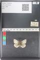 http://mczbase.mcz.harvard.edu/specimen_images/ent-lepidoptera/images/2011_03_23/IMG_078469.JPG