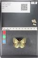 http://mczbase.mcz.harvard.edu/specimen_images/ent-lepidoptera/images/2011_03_23/IMG_078471.JPG