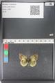 http://mczbase.mcz.harvard.edu/specimen_images/ent-lepidoptera/images/2011_03_23/IMG_078472.JPG