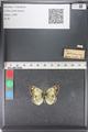 http://mczbase.mcz.harvard.edu/specimen_images/ent-lepidoptera/images/2011_03_23/IMG_078473.JPG