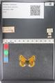 http://mczbase.mcz.harvard.edu/specimen_images/ent-lepidoptera/images/2011_03_23/IMG_078475.JPG