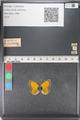 http://mczbase.mcz.harvard.edu/specimen_images/ent-lepidoptera/images/2011_03_23/IMG_078477.JPG