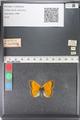 http://mczbase.mcz.harvard.edu/specimen_images/ent-lepidoptera/images/2011_03_23/IMG_078478.JPG