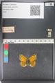 http://mczbase.mcz.harvard.edu/specimen_images/ent-lepidoptera/images/2011_03_23/IMG_078482.JPG