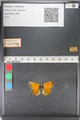 http://mczbase.mcz.harvard.edu/specimen_images/ent-lepidoptera/images/2011_03_23/IMG_078483.JPG