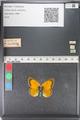 http://mczbase.mcz.harvard.edu/specimen_images/ent-lepidoptera/images/2011_03_23/IMG_078485.JPG